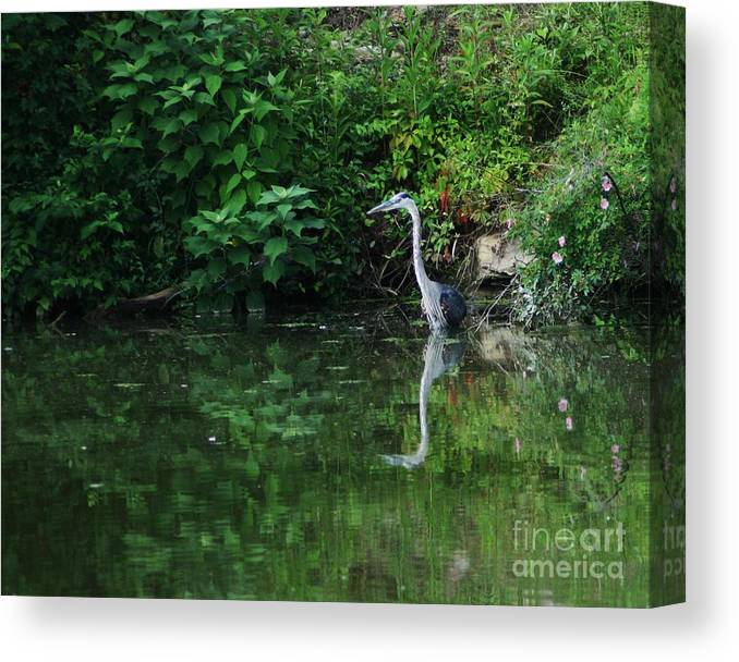 Lanscape Water Bird Crane Heron Blue Green Flowers Great Photograph Canvas Print featuring the photograph Great Blue Heron Hunting Fish by Dawn Downour