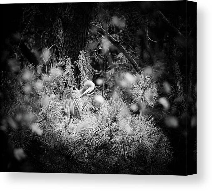 Great Blue Heron Canvas Print featuring the photograph Hiding Place by Michael McStamp