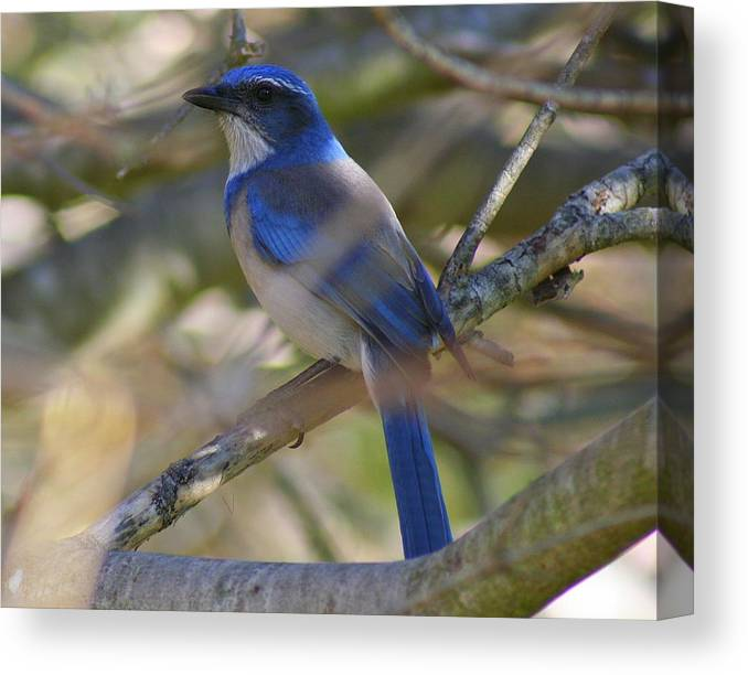 Blue Bird Canvas Print featuring the photograph I Think I Found The Blue Bird Of Happiness by Kerry Reed