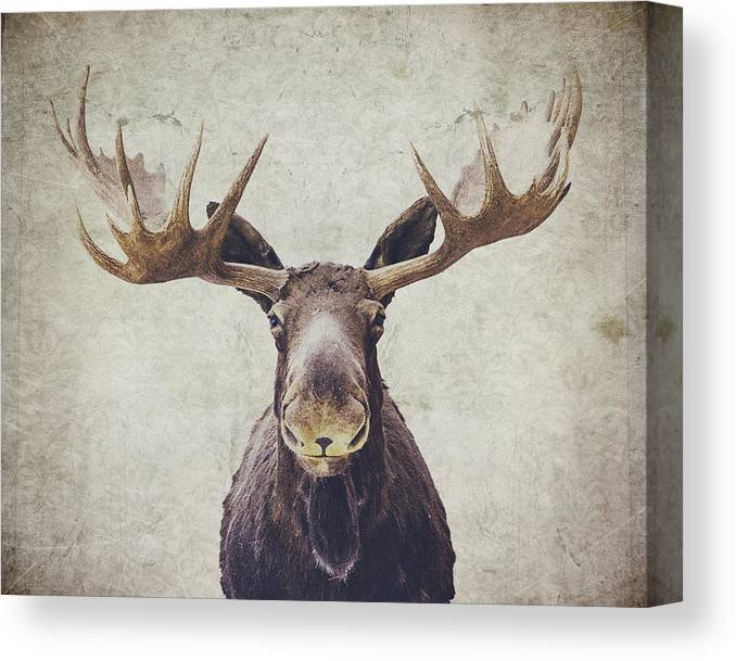Moose Canvas Print featuring the photograph Moose by Nastasia Cook