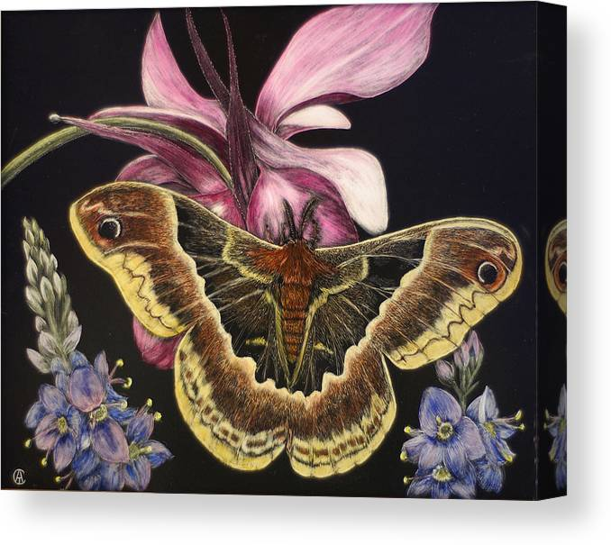Moth Canvas Print featuring the painting Moth by Angie Cockle