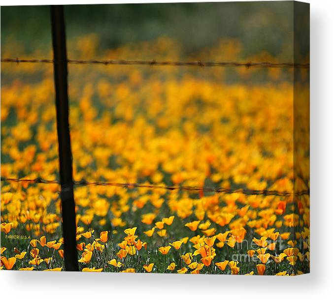 Flowers Canvas Print featuring the photograph Poppies And Barbed Wires by Parker