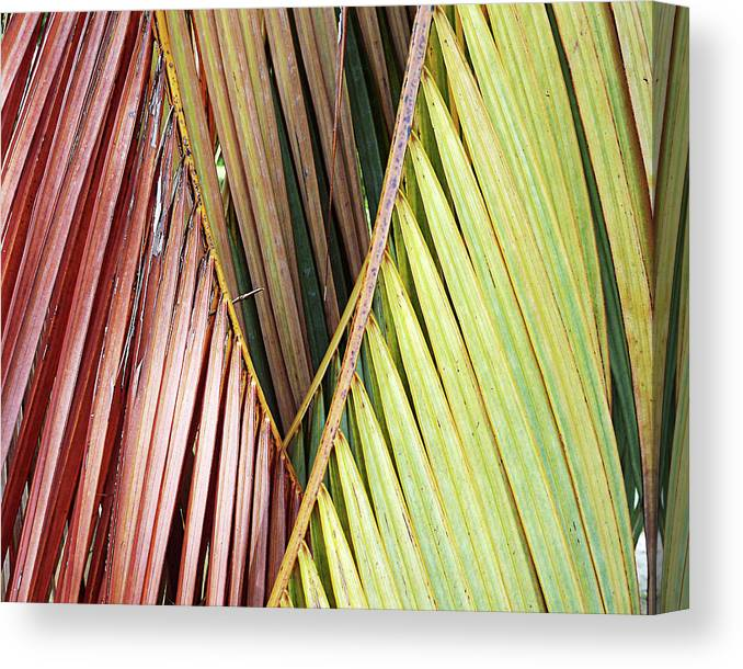 Florida Canvas Print featuring the photograph Rainbow Of Palms Gp by Chris Andruskiewicz