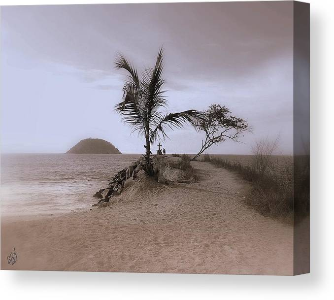 Palm Tree Canvas Print featuring the photograph Soledad by Kathy Simandl