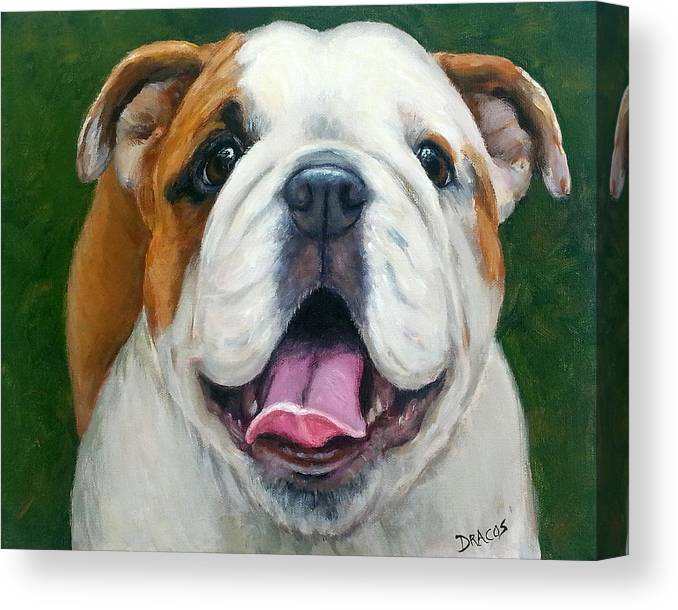 English Bulldog Canvas Print featuring the painting Sweet Little English Bulldog by Dottie Dracos