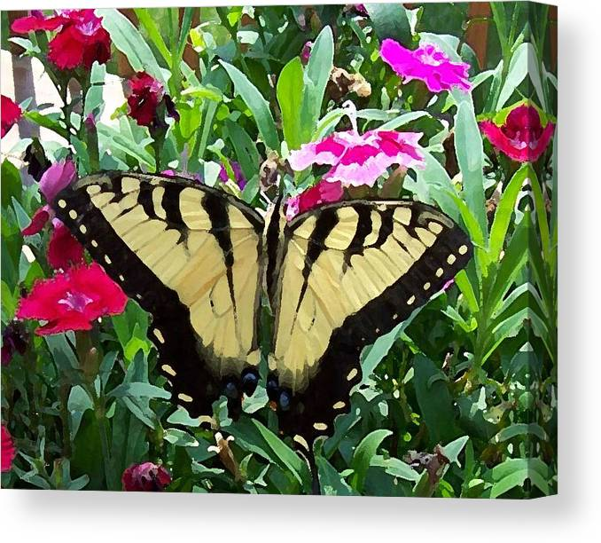 Swallowtail Canvas Print featuring the photograph Symmetry by Sandi OReilly