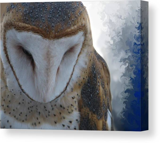Bird Canvas Print featuring the photograph Thoughtful by Ken Barker
