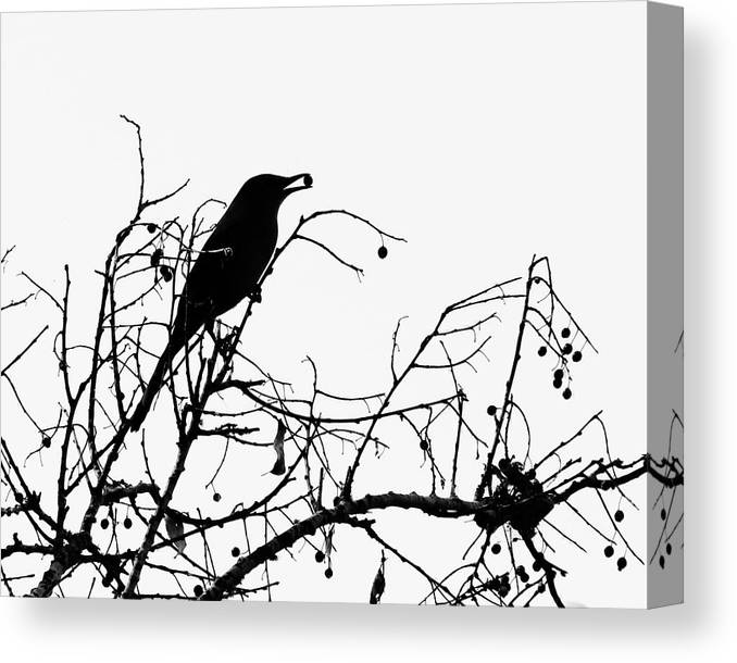 Nature Canvas Print featuring the photograph Top Bird by Peg Urban