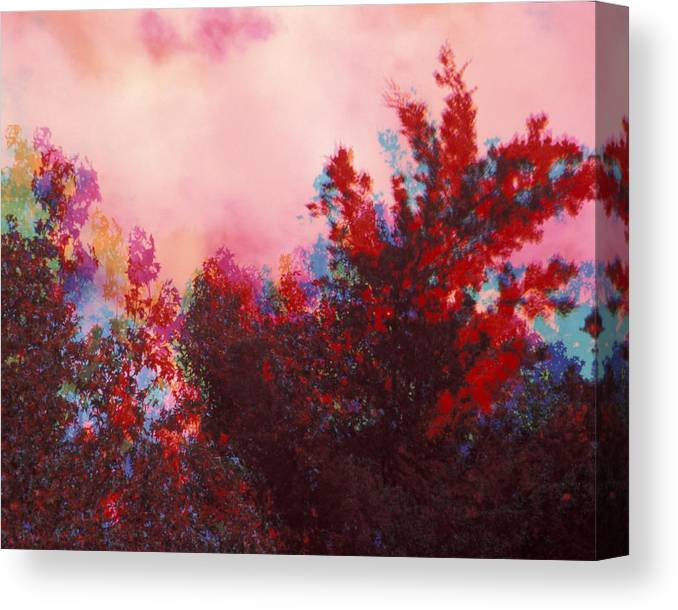 Trees Canvas Print featuring the photograph Tree Times Three by Bob Guthridge