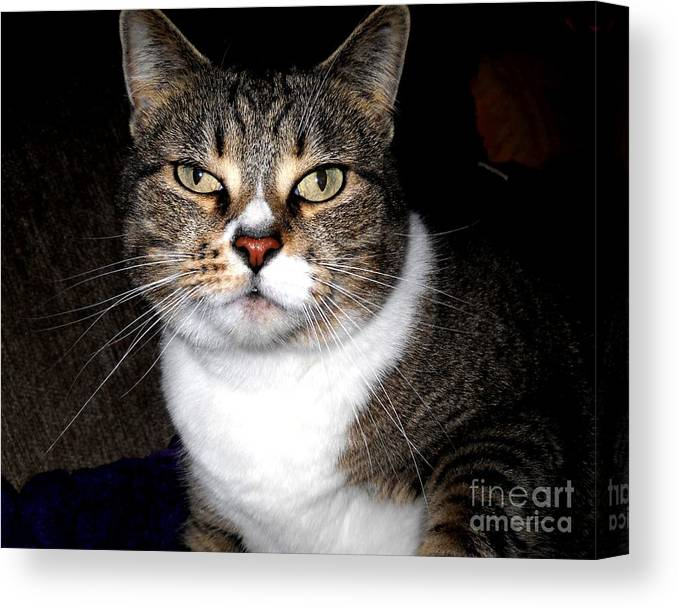 Cat Canvas Print featuring the photograph Watching You by Leslie Revels
