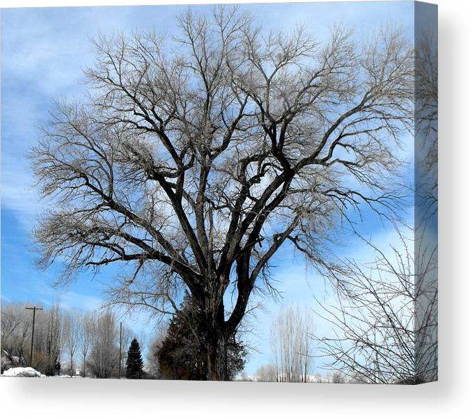 Winter Canvas Print featuring the photograph Winter Tree by Jan Tribe