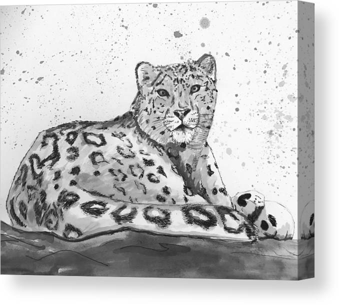Snow Leopard Canvas Print featuring the drawing Snow Leopard by Amber Nation