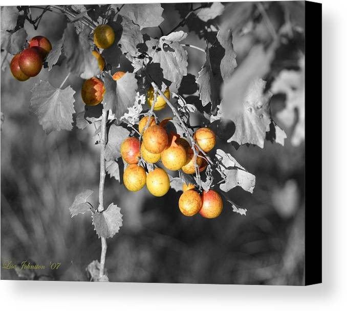 Muscadine Canvas Print featuring the photograph Before The Wine by Lisa Johnston