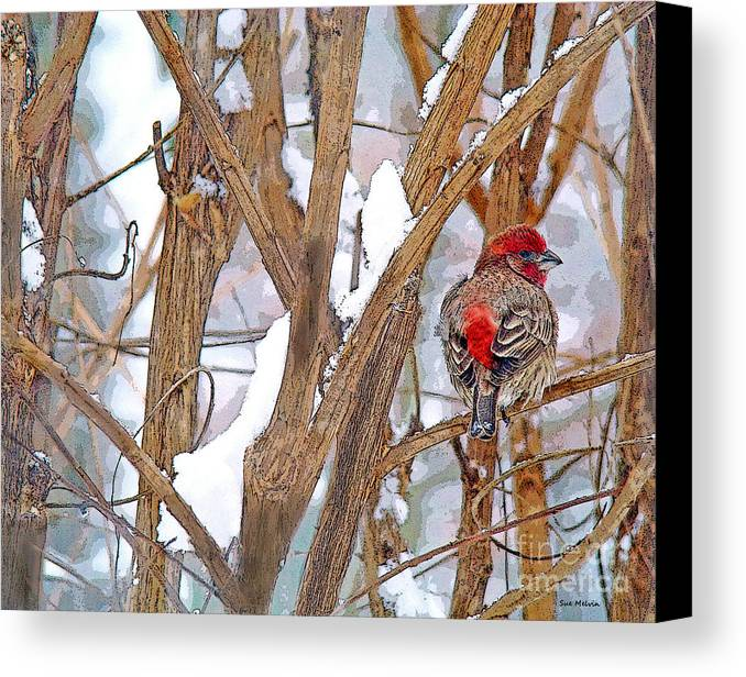 Finch Canvas Print featuring the photograph Alone In The Snow Storm by Sue Melvin