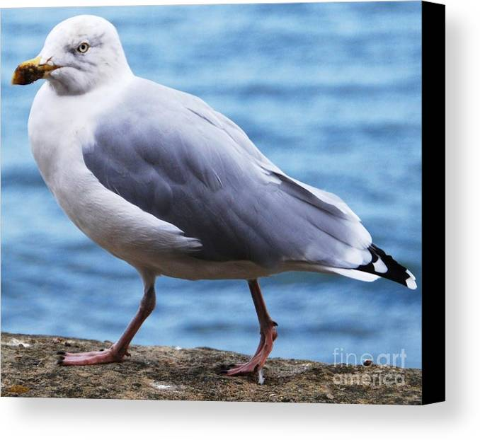 Seabird Art Animal Portrait Nature Bird Seagull Attitude Outdoors Wildlife Water Background Expressive Whimsical Metal Frame Canvas Print Poster Print Wood Print Available On Tote Bags Mugs Phone Cases Spiral Notebooks Greeting Cards T Shirts And Shower Curtains Canvas Print featuring the photograph I Am Outta Here by Marcus Dagan