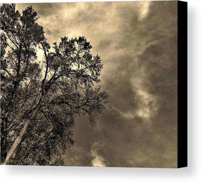 Nature Canvas Print featuring the photograph Serene Moment by Charles Lucas