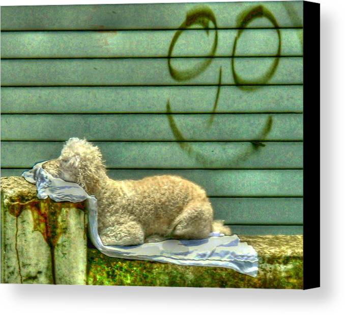 Dogs Canvas Print featuring the photograph The Good Life by Myrna Bradshaw