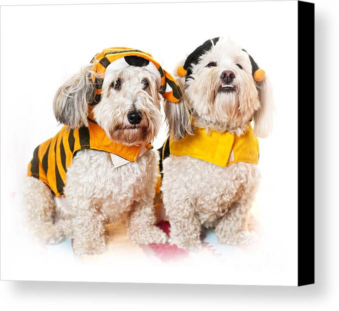 Dogs Canvas Print featuring the photograph Cute Dogs In Halloween Costumes by Elena Elisseeva