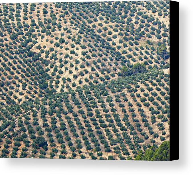 Horizontal Canvas Print featuring the photograph Olive Groves, Andalusia, Southern Spain. by Ken Welsh