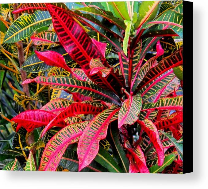 Red Canvas Print featuring the photograph A Rich Composition by Ian MacDonald
