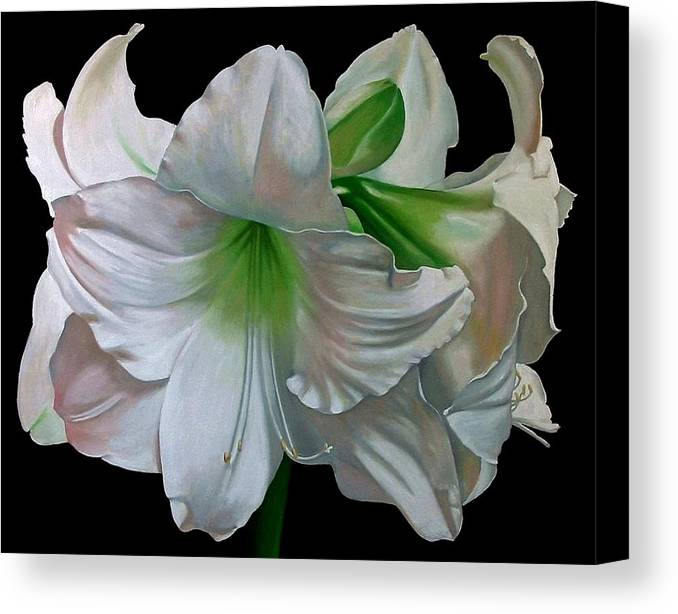 Doug Strickland Canvas Print featuring the painting Amaryllis by Doug Strickland
