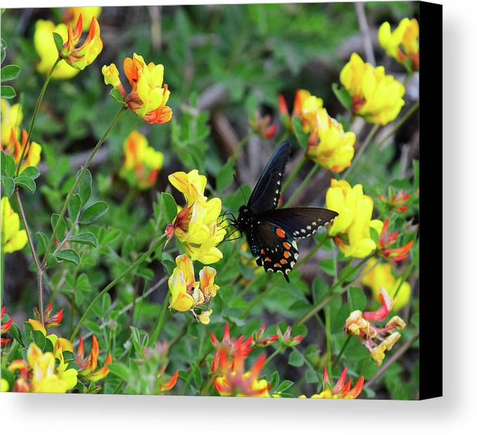 Butterfly Canvas Print featuring the photograph Butterfly 1 by Alan C Wade