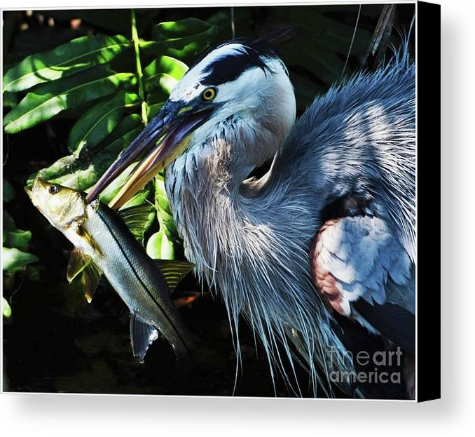Heron Canvas Print featuring the photograph Catch Of The Day by Pamela Blizzard