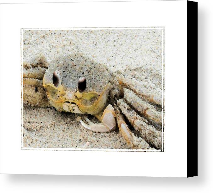 Crab Canvas Print featuring the photograph Crusty by Robert Boyette