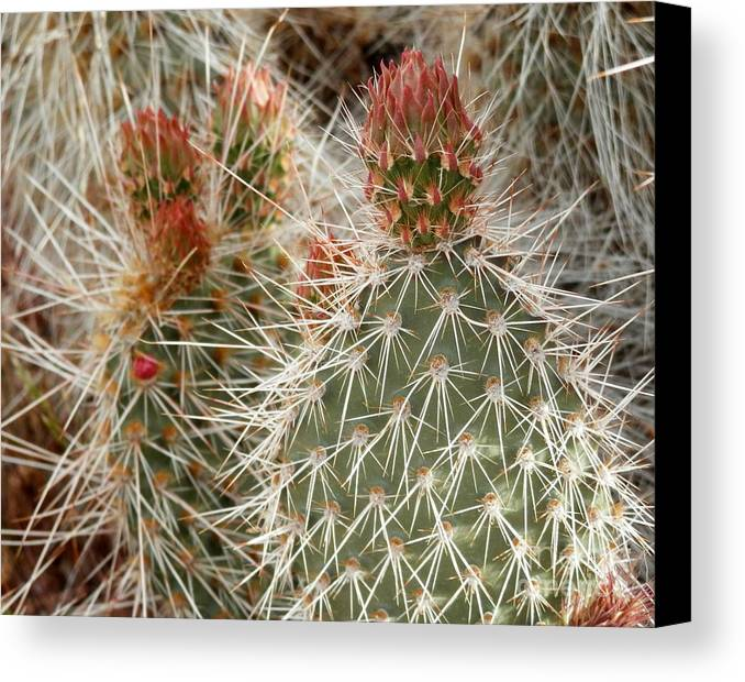 Cactus Canvas Print featuring the photograph Desert Duo by L Cecka