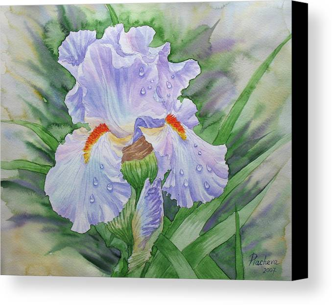 Flowers Canvas Print featuring the painting Dew On Light Blue Iris. by Natalia Piacheva