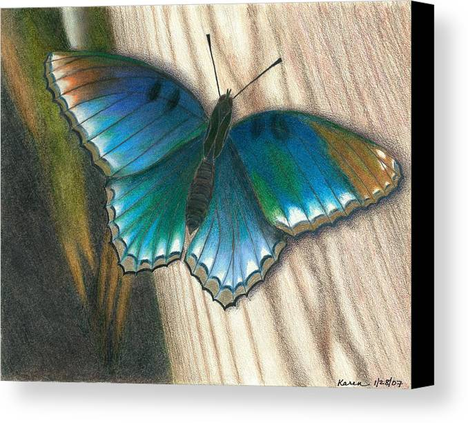 Crayola Prismacolor Butterfly Wood Blue Green Brown Moth Canvas Print featuring the drawing Experiment by Karen Miller