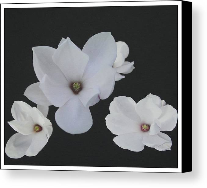 Magnolias Canvas Print featuring the painting Floating Magnolias Dp20 by Mary Gaines
