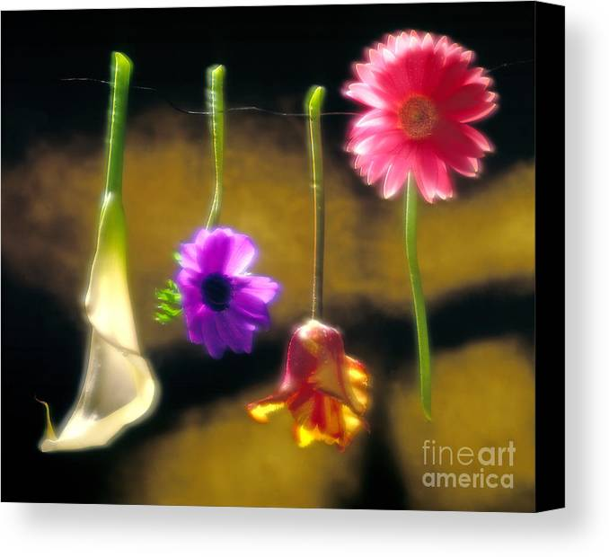 Tulip Canvas Print featuring the photograph Hanging Flowers by Tony Cordoza