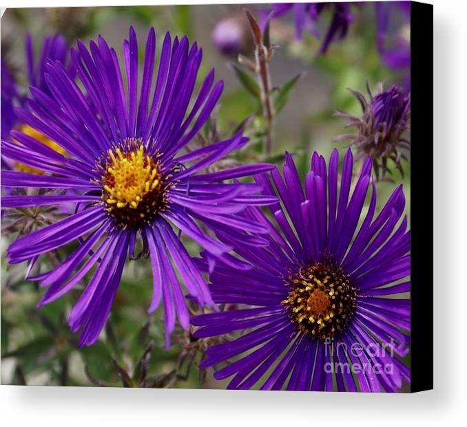 Plant Canvas Print featuring the painting My Purple Ways by Debbie May