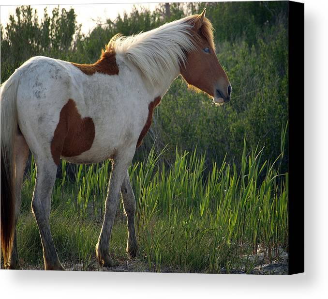 Filly Canvas Print featuring the painting Sunset Filly by Kim