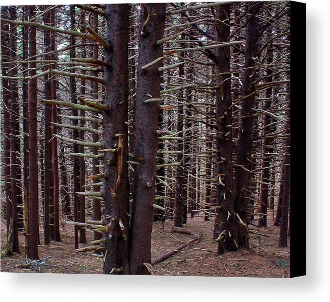 Forest Canvas Print featuring the photograph Timeless Forest by Ted M Tubbs