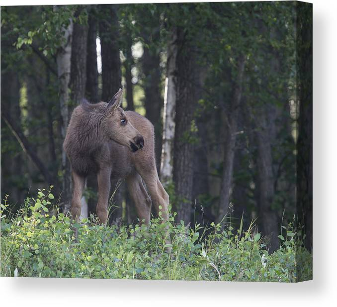 Doug Lloyd Canvas Print featuring the photograph Looking For Mom by Doug Lloyd
