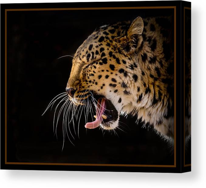 Animals Canvas Print featuring the photograph Nap Time by Ernie Echols