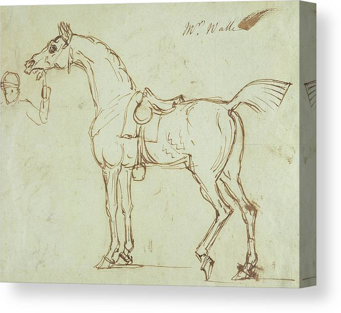 Horse Canvas Print featuring the drawing A Racehorse, Bridled And Saddled by James Seymour