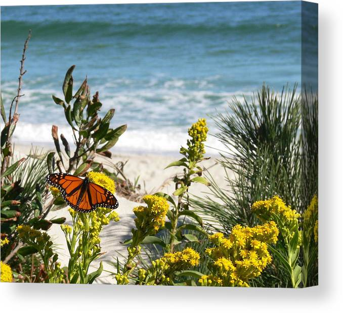 Monarch Canvas Print featuring the photograph By The Sea by Tom LoPresti