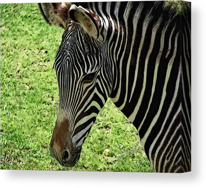 Fascinated Canvas Print featuring the photograph Fascinated by Lisa S Baker