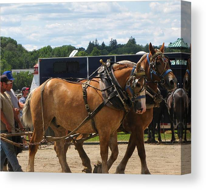 Horses Canvas Print featuring the photograph Horse Pull I by Melissa Parks