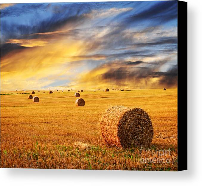 Farm Canvas Print featuring the photograph Golden Sunset Over Farm Field With Hay Bales by Elena Elisseeva