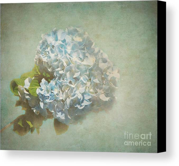 Bob And Nancy Kendrick Canvas Print featuring the photograph First Hydrangea - Texture by Bob and Nancy Kendrick