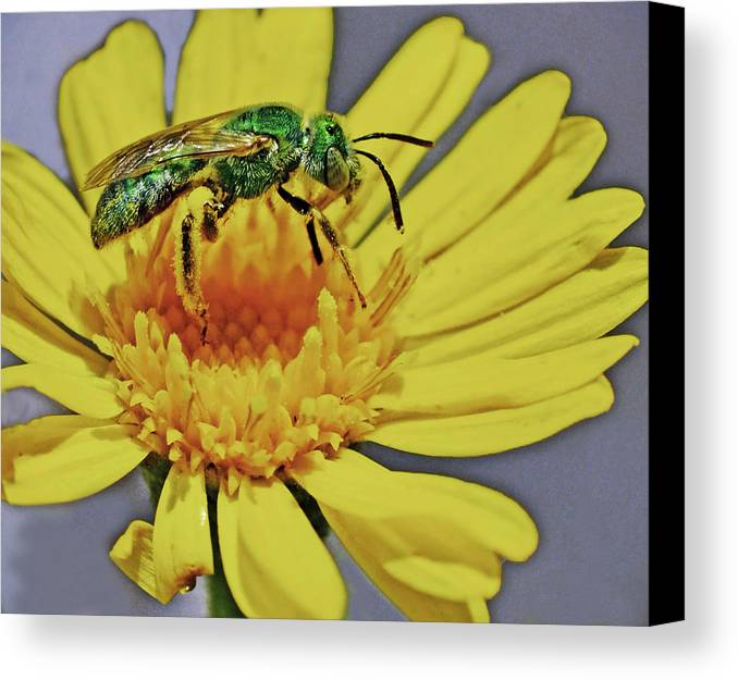 Insect Canvas Print featuring the photograph Green On Yellow by George Davidson