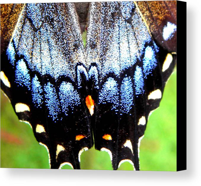 Monarch Butterfly Canvas Print featuring the photograph Monarchs Blue Glow by Kim Galluzzo Wozniak