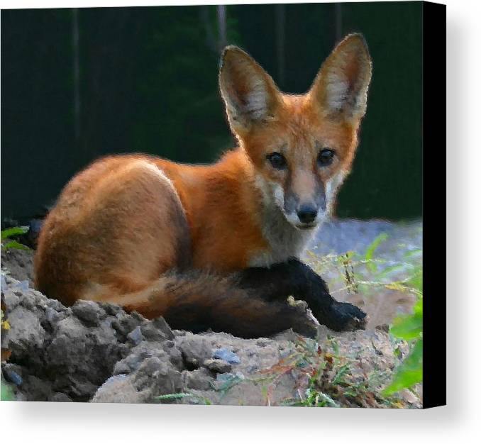 Red Fox Canvas Print featuring the photograph Red Fox by Kristin Elmquist