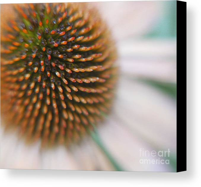 Fine Art Floral Macro Canvas Print featuring the photograph Sea Hedgehog by Irina Wardas