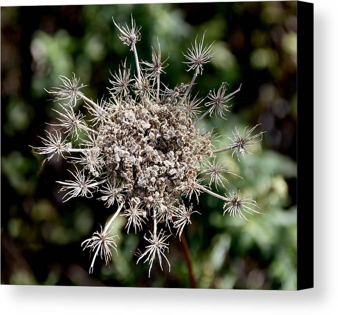 Nature Canvas Print featuring the photograph Weeds by Bob Slitzan