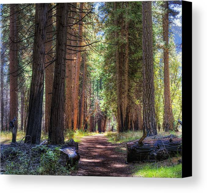 Hdr Panoramic Canvas Print featuring the photograph Yosemite Trail by Stephen Campbell